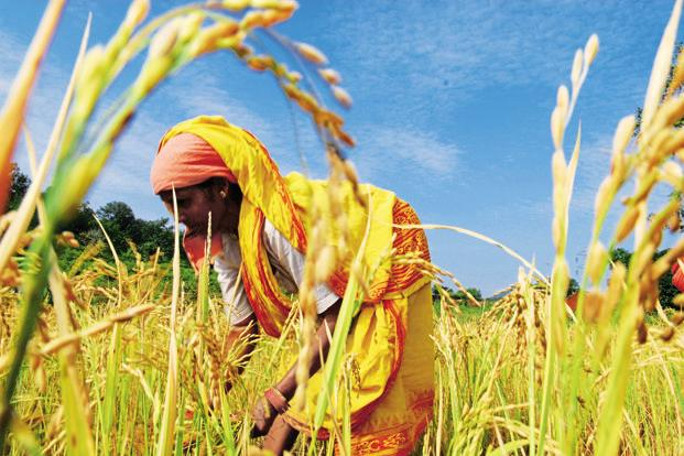 Rupee rally to slow export of non-basmati rice